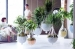 How indoor trees can inject life into your interior scheme